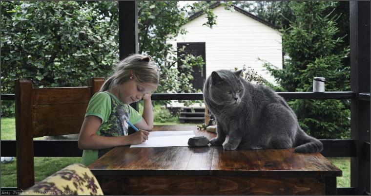 mathematics-tasks-for-cats