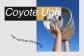 Coyote Ugly | Alecrim 50 | até 4 novembro