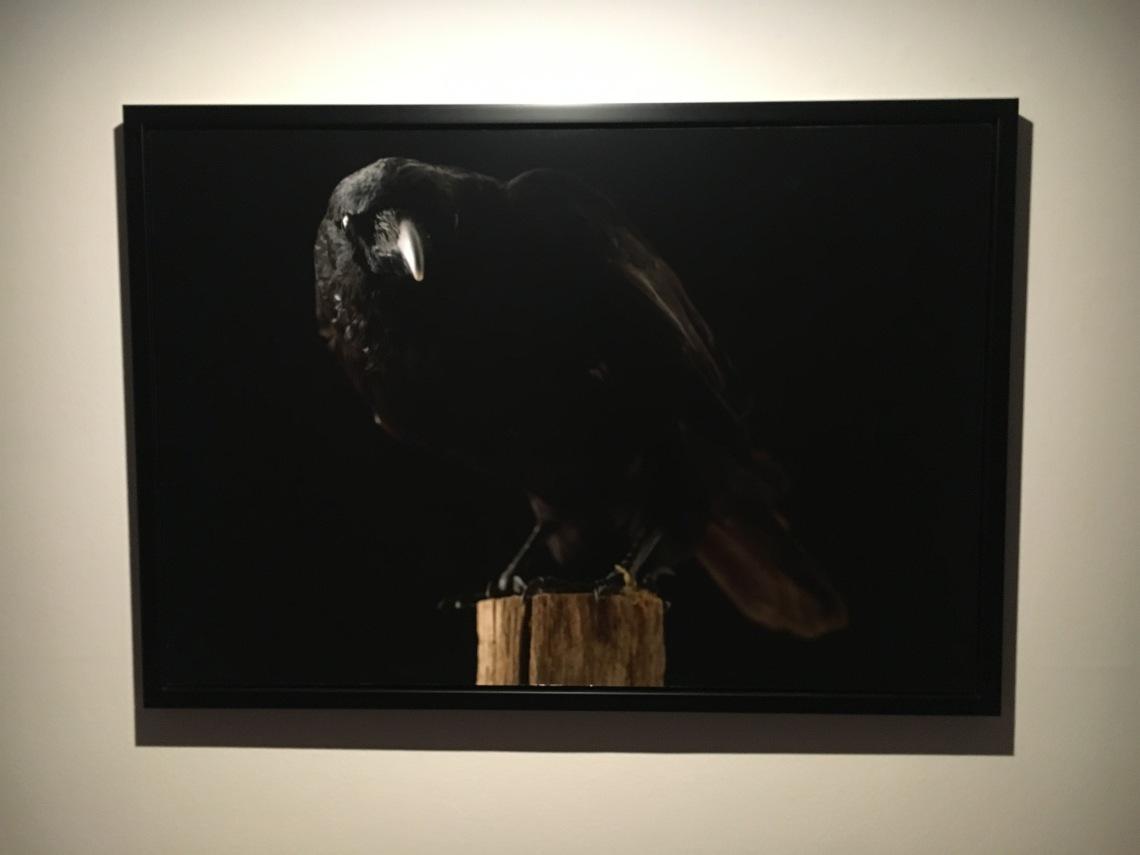 rodrigo tavarela peixoto | crow 2013 1